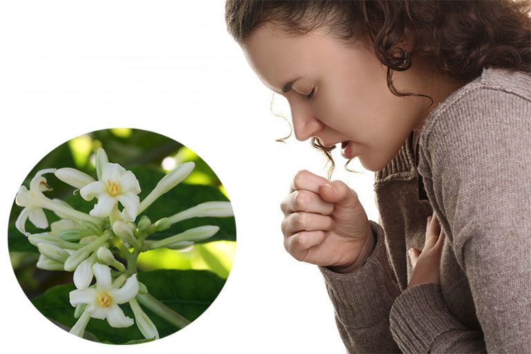 chữa ho bằng hoa đu đủ đực